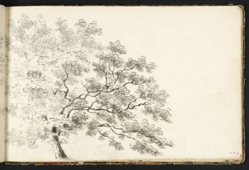 Study of a Tree, with a Line of Trees Beyond, circa 1789, Joseph Mallord William Turner, 1775-1851 (Image courtesy of Tate Britain)