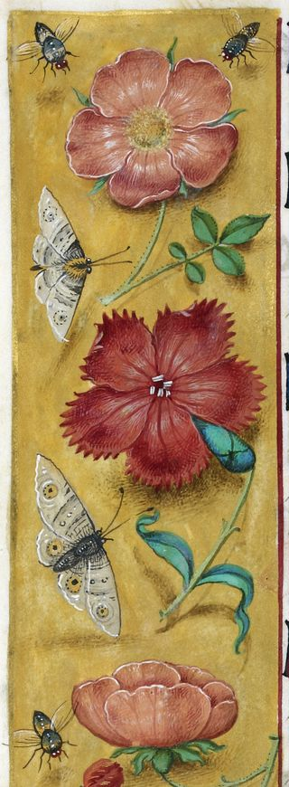 Detail of border with flowers, moths, flies - Hours of Joanna I of Castille, Netherlands, c. 1500 British Library