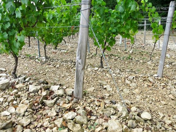 Kimmelridgian chalky soil, Chablis area