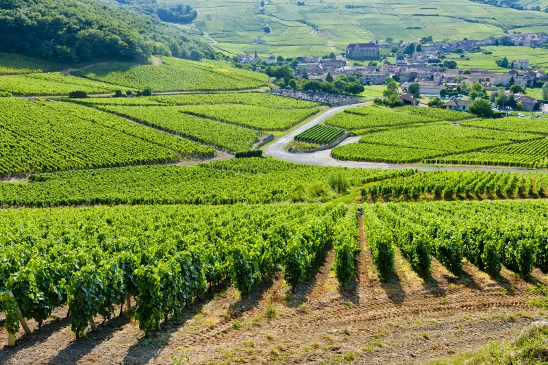 Vineyard in the Yonne, Burgundy