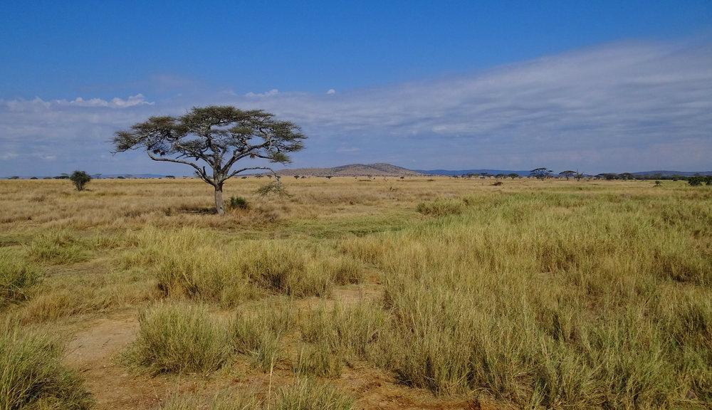Serengeti Landscape, N. Tanzania