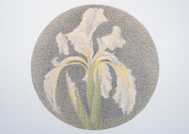 White Iris, Marie José Malargé. gouache