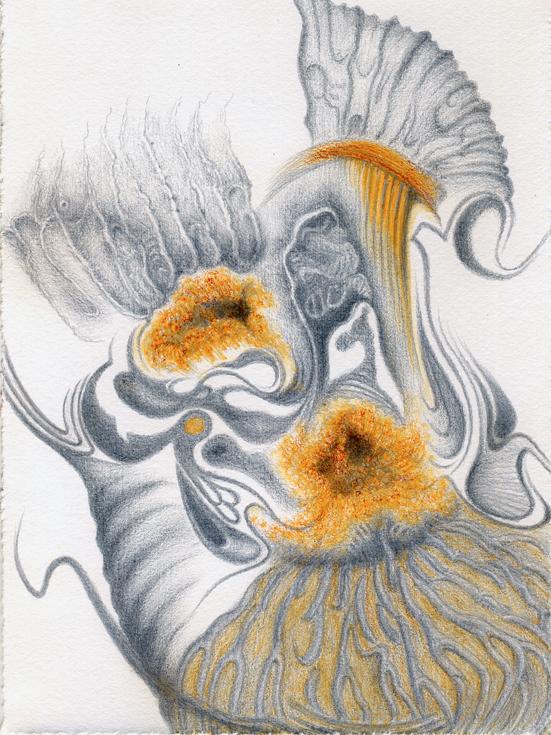 Ammonites de Bourgogne ,2015, silverpoint-waterclour artist Jeannine Cook