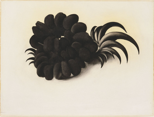 Georgia OKeeffe, Eagle, Claw, and Bean Necklace, 1934, charcoal