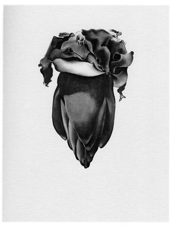 Banana Flower, 1933, charcoal, Georgia O'Keeffe