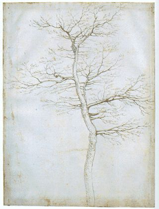 Fra Bartolommeo (1472-1517) , Tree in winter, c.1504, pen & ink (Image courtesy of the Courtauld Institute of Art)