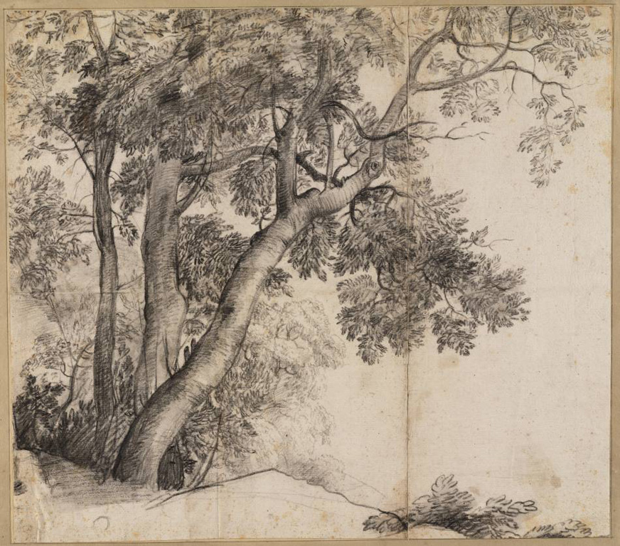 Group of trees, ca. 1655-1660, black chalk, Claude Lorrain, (image courtesy of Teylers Museum)