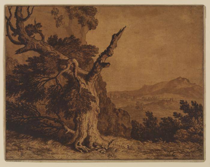 A blasted tree in a landscape, c. 1780, brown ink and wash over graphite, Alexander Cozens (1717 - 1786) (Image courtesy of the Courtauld Institute of Art)