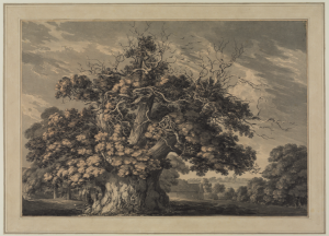 The Chestnut Tree at Little Wymondley, Hertfordshire (1789) Thomas Hearne, 1744-1817 (image courtesy of the Courtauld Instiitute of Art)
