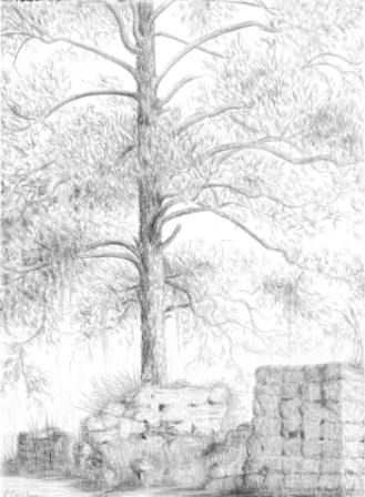 Tabby Ruins at Chocolate, Sapelo Island, silverpoint