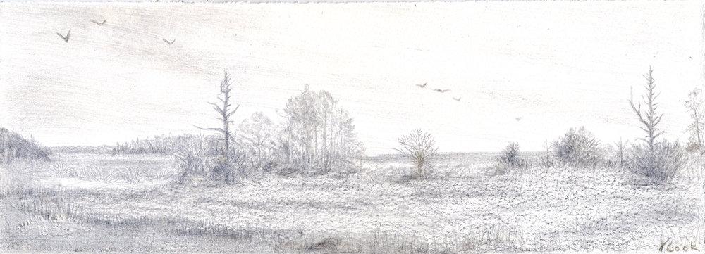 Cabretta, Sapelo Island, silverpoint, artist Jeannine Cook