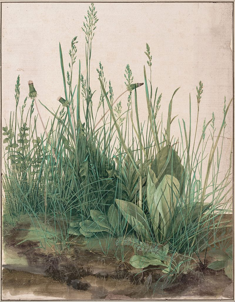 Albrecht Dürer  , The Great Piece of Turf , 1503 watercolor and gouache heightened with white, mounted on cardboard, Albertina Museum, Vienna