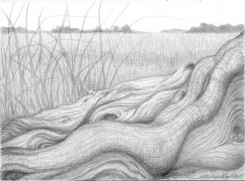Marsh Survivor, silverpoint, Jeannine Cook artist.