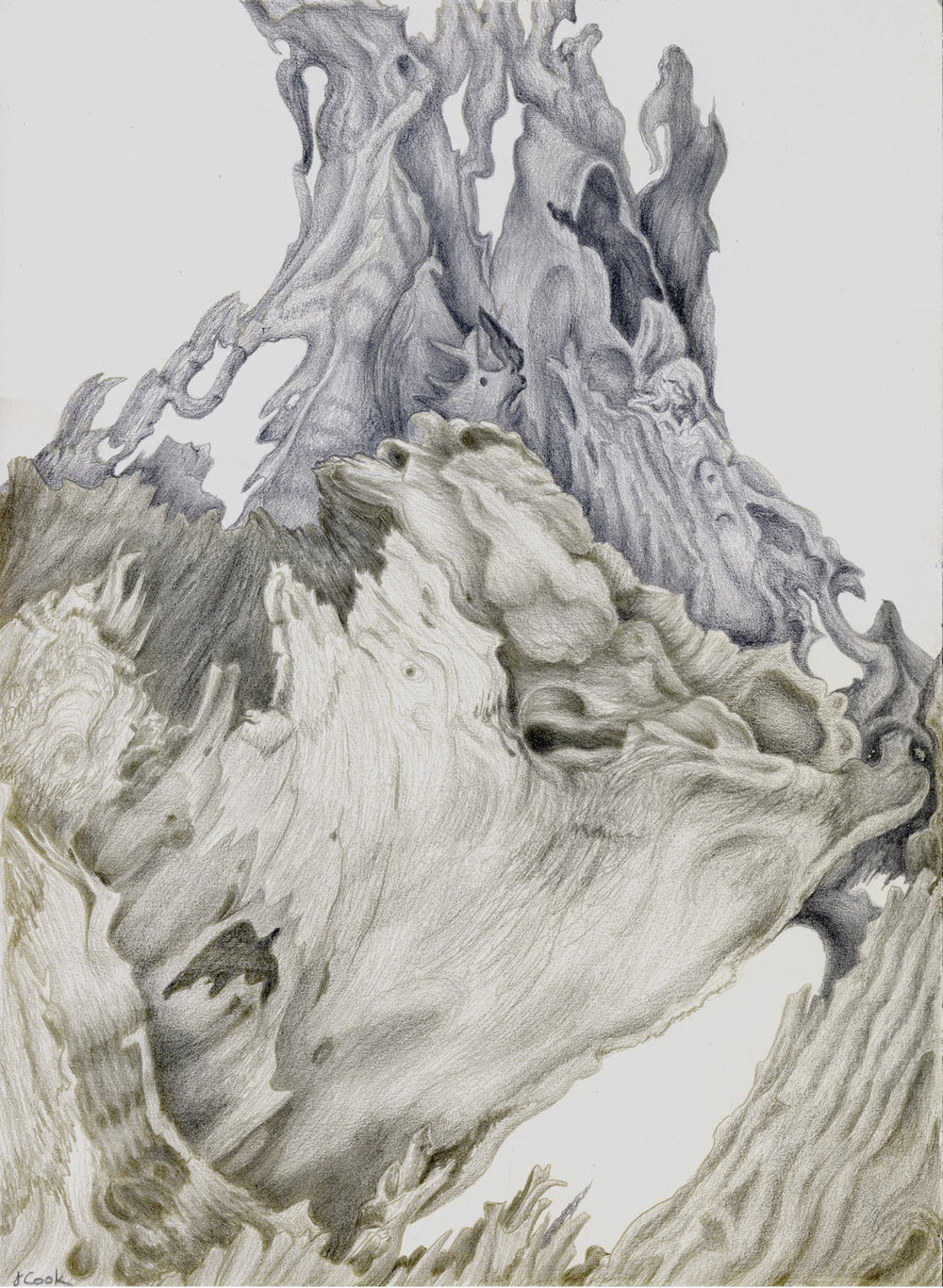 Cedar Remains , silverpoint, Jeannine Cook