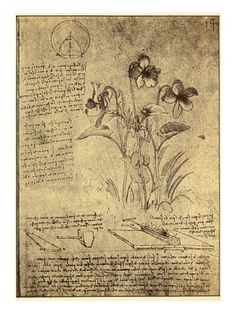 "A sheet of studies, that has been dated to  ""about 1487-90"" , from the Bibliothèque de l'Institut de France (B fol. 14r), showing Leonardo's study of violets and designs for a means of soldering lead roof coverings."