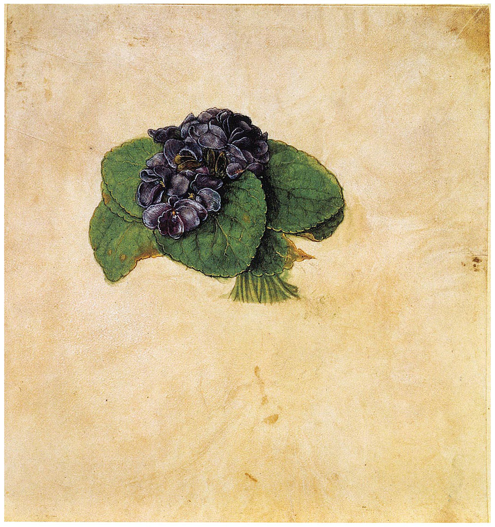 Bouquet of Violets,  Albrecht Dürer, c. 150, 1505,body colour and watercolour on parchment, (Image courtesy of Graphische Sammlung Albertina)