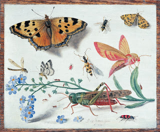 Jan van Kessel, Drawings of insects, c. 1653, Oil on Copper