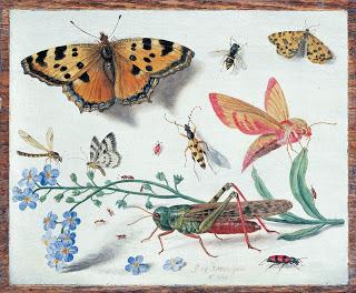 Jan van Kessel, Drawings of insects, c. 1653, Oil on Copper
