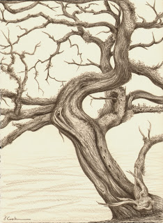 Last Days for the Cedar, Prismacolor, Jeannine Cook artist