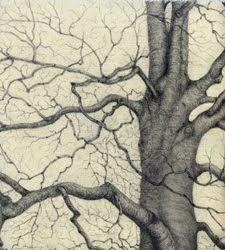 Givhans Ferry Beech , graphite, Jeannine Cook artist