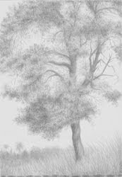 A-Top the Terrace, Palma, silverpoint, Jeannine Cook, Private collection