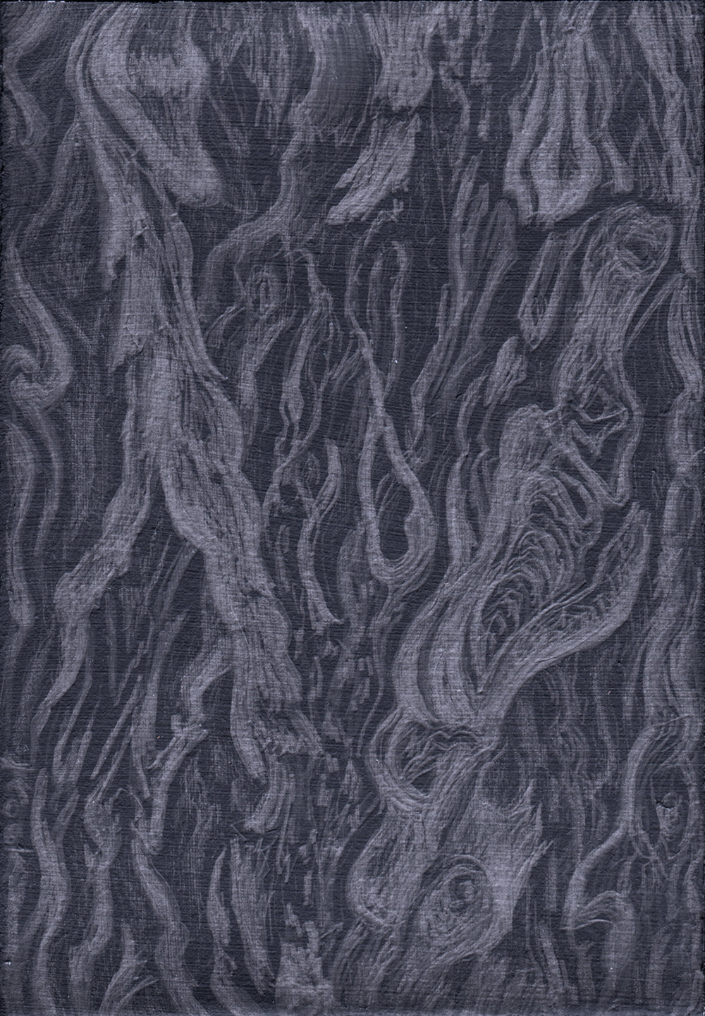 Apoyos I - coffee tree bark - silverpoint, Jeanine Cook artist