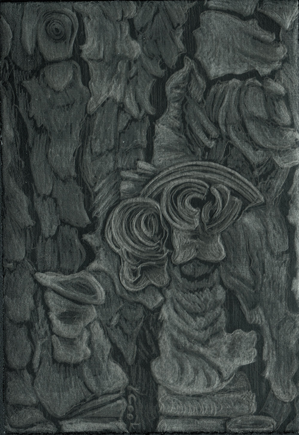 Apoyos IV - Pine tree bark - silverpoint. Jeannine Cook artist