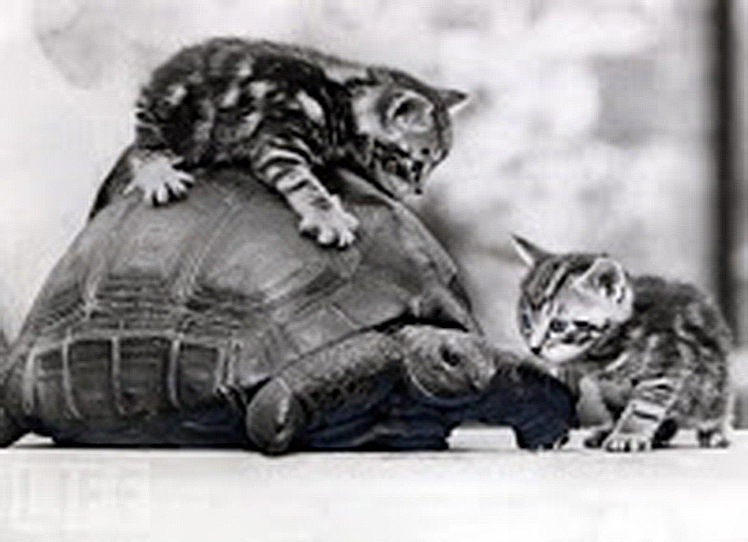 Two curious kittens sniff out a tortoise. I(mage courtesy of Life.com )