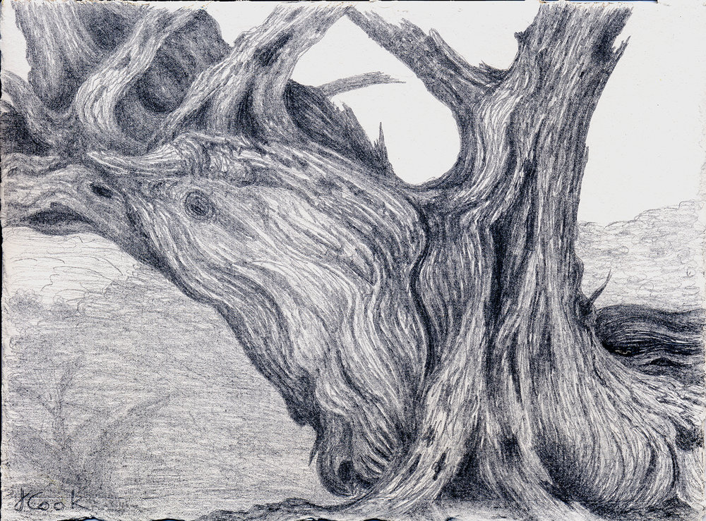 The Cedar Seer, silverpoint, Jeannine Cook artist