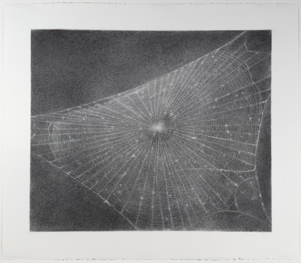 Vija Celmins  , Web # 1,  Charcoal on paper, Image courtesy of Tate /  National Galleries of Scotland