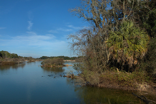 Woody Pond Habitat with Palm Tree Harris Neck NWR McIntosh County, GA (Image courtesy of Brian Brown, photographer)