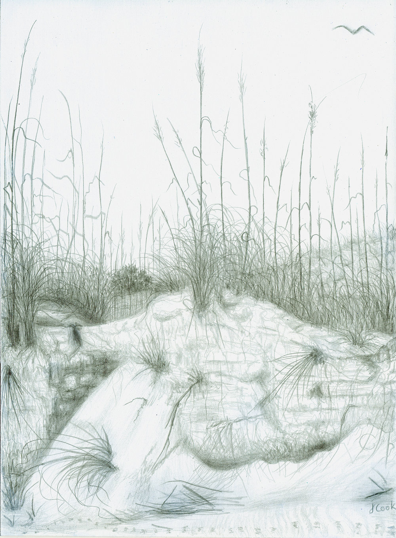 Sapelo Dunes, silverpoint, Jeannine Cook artist