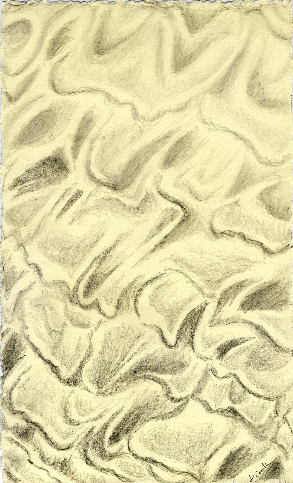 Low Tide Tracery, graphite, Jeannine Cook artist