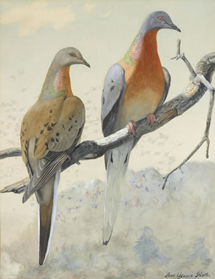 A pair of passenger pigeons (accompanied by a second work _, (Image courtesy of Askart.com)