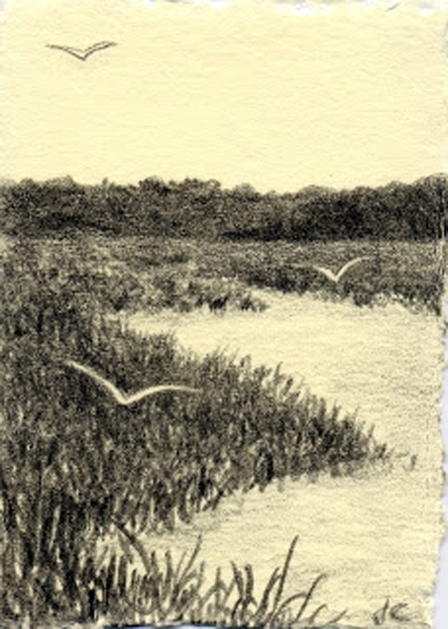 Summer Marsh, graphite, Jeannine Cook artist