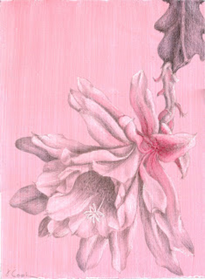 Marianna's Gift, silverpoint.watercolour on tinted ground, Jeannine Cook artist