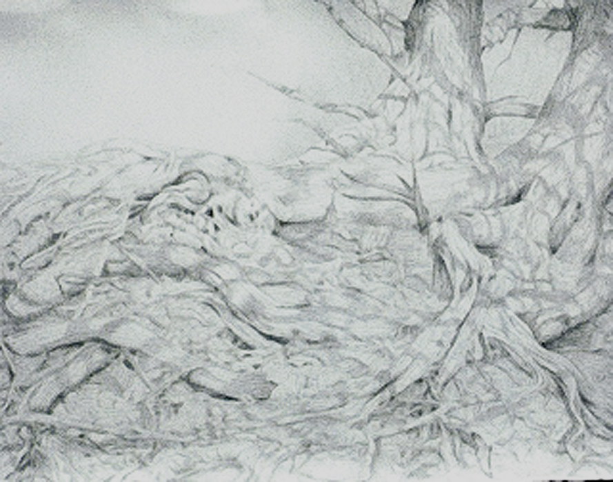 Tenacity amid the Oyster Shells, silverpoint, Jeannine Cook artist
