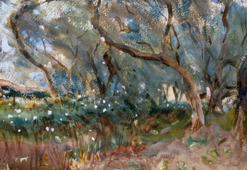 Olive Trees, Corfu, 1909, watercolour, John Singer Sargent.