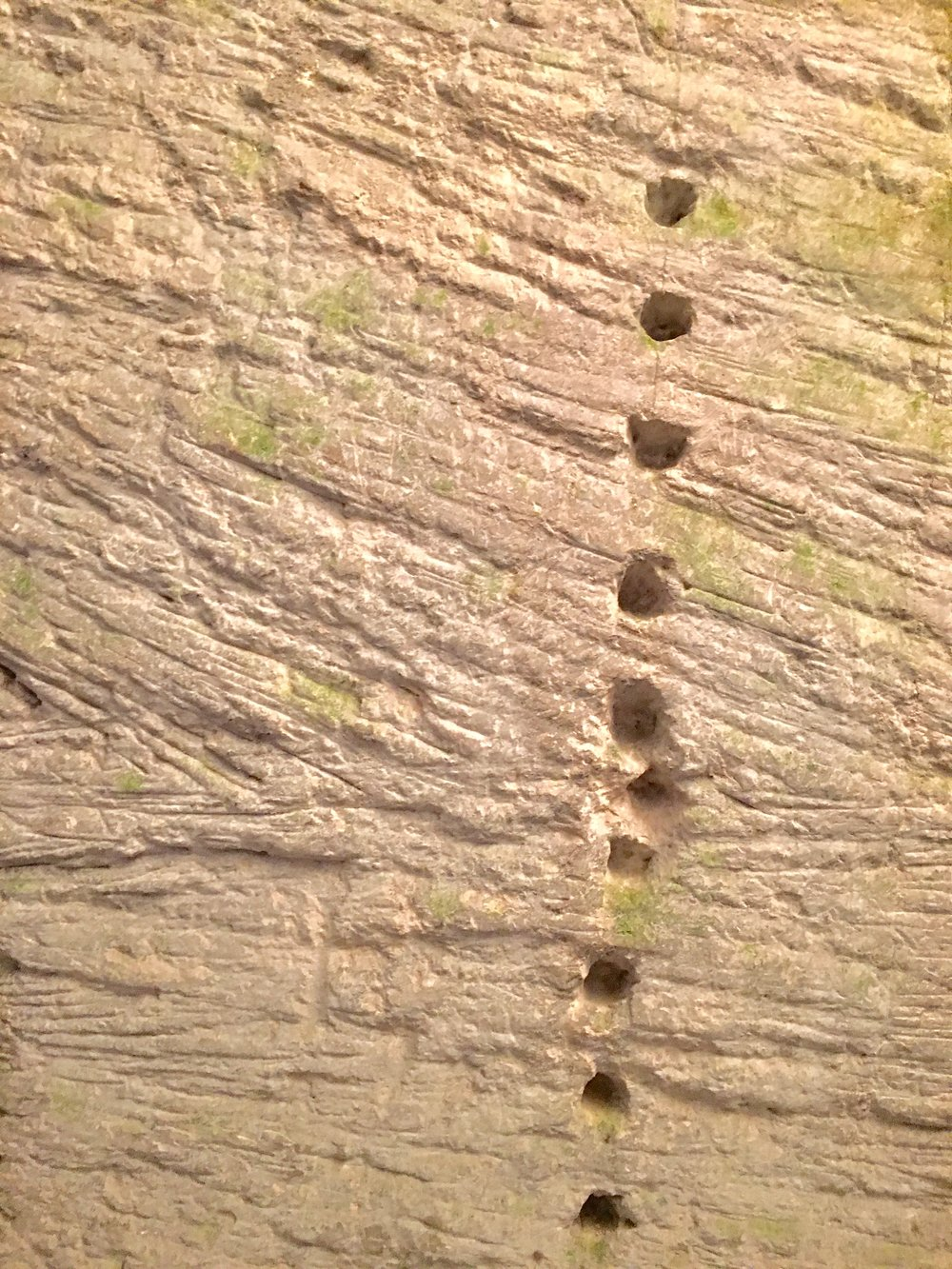 Patterns of the lance holes on the rock face, delineating a block of stone to be quarried (photograph J. Cook)