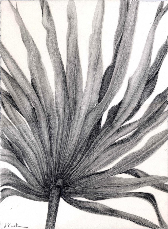 Pritchard's Island Palmetto - graphite-132.jpg
