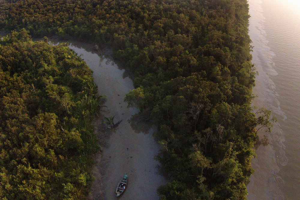 Oilspill in the Sundarbans