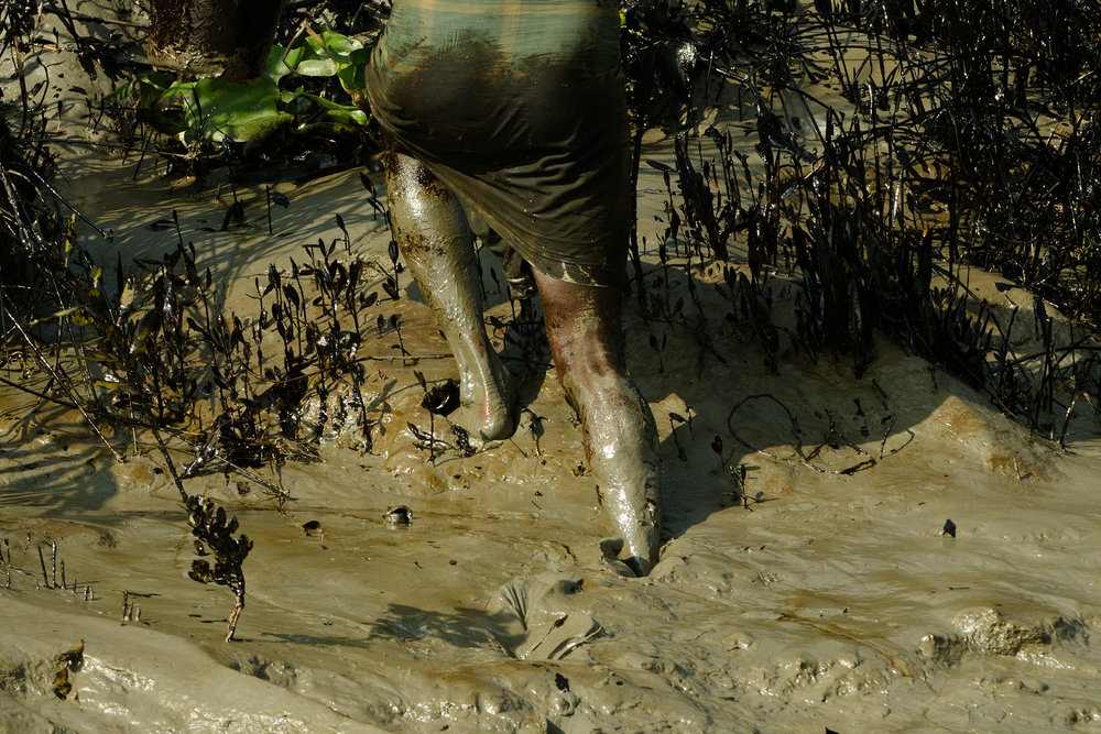 Trampling oil into mudflats