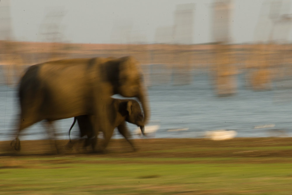 mom_baby_elephant_running.jpg