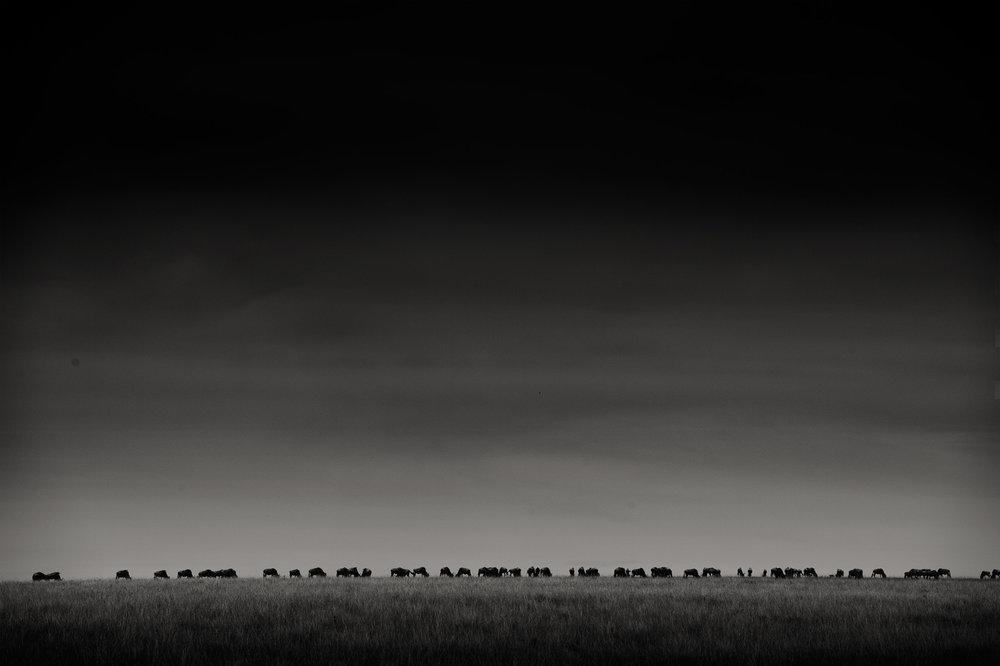 mara_wildebeest.jpg