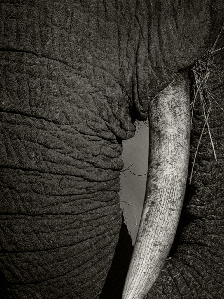 trunk2_1024.jpg