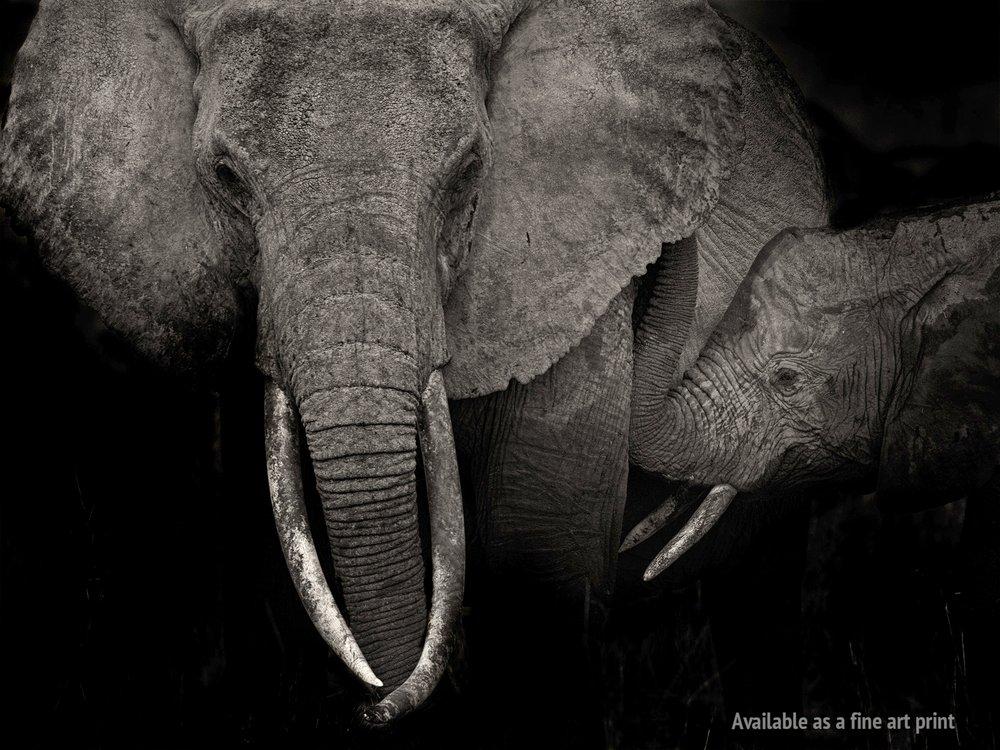 2017_Amboseli_Eloise_kid.jpg