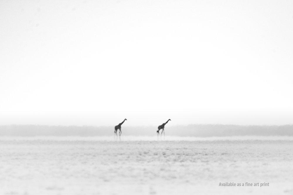 giraffes_mirage.jpg