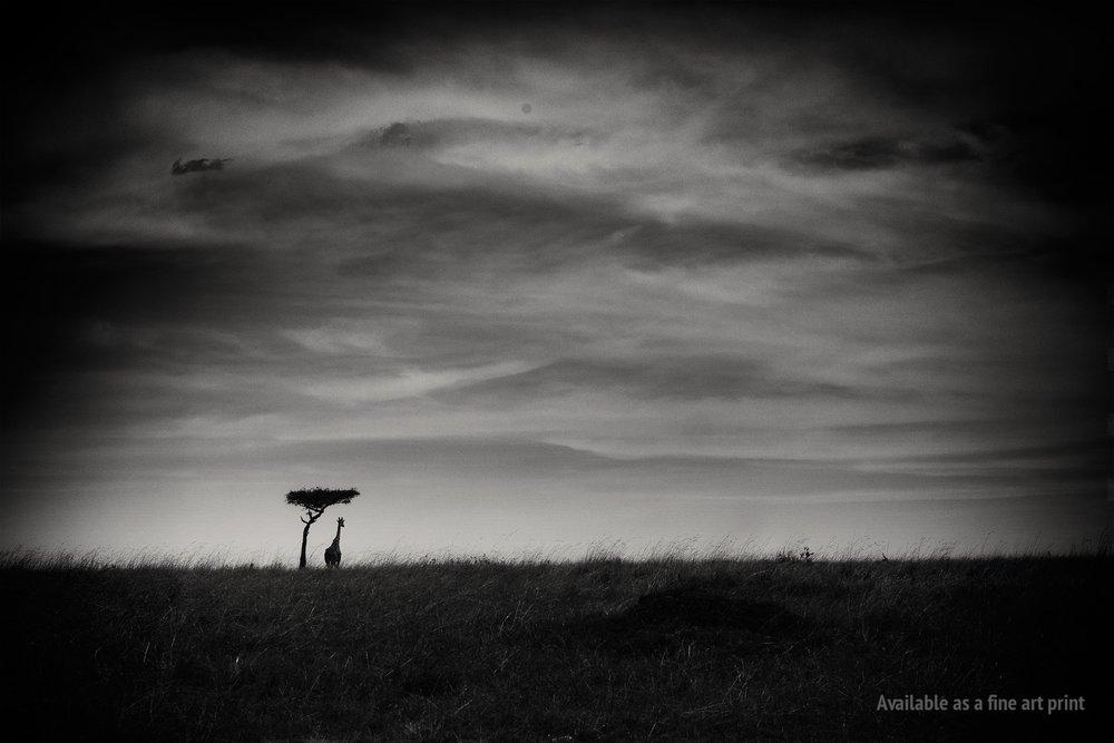 mara_giraffes_world.jpg