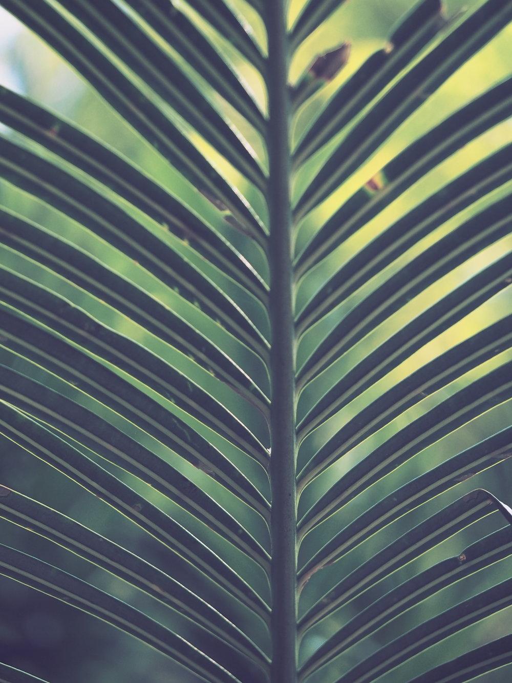 Palm Sunday - Sunday March 25, 2018