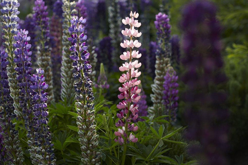 504_Blumen.jpg
